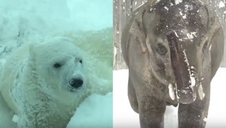 It Snowed At The Oregon Zoo Yesterday And The Animals Had So Much Fun, Especially The Baby Polar Bears