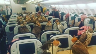Saudi Prince Buys 80 Airline Tickets For His Pet Falcons