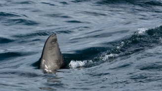 Scuba Diver Has No Clue A MASSIVE Great White Shark Is Inches Above His Head In Scary Encounter