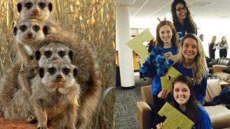 Someone Realized That Sorority Girls Always Pose Like Meerkats In Photos And, LOL, They're 100% Correct!