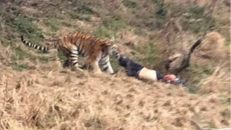 Terrifying Footage Released Of Three Tigers Mauling A Man To Death After He Climbs Into Their Enclosure At Chinese Zoo