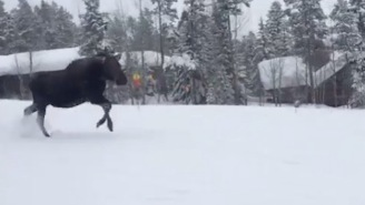 Pissed Off Moose Charges Snowboarders In Jackson Hole