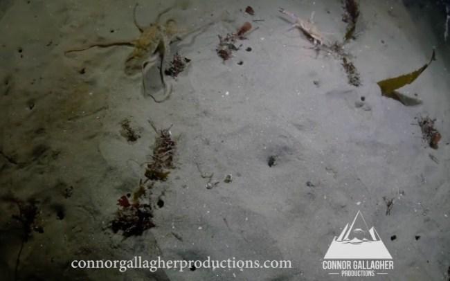 octopus vs crab fight vs seal