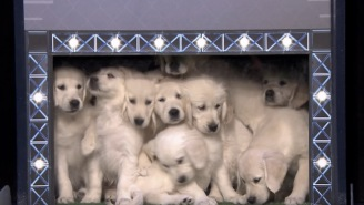 Place Your Bets Because This Prediction Is Flawless: Puppies Predict Super Bowl 51 Winner