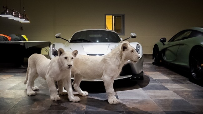 Rare White Lions And Supercars
