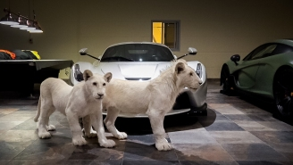 Check Out This Baller AF Garage Featuring Supercars And White Lions