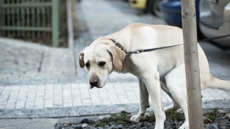 Angry New Yorkers Create 'THE POOP WALK OF SHAME' To Guilt Dog Walkers Into Scooping Their Poop
