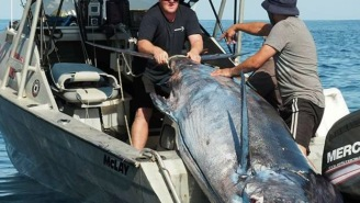 1,027-Pound Blue Marlin Is The Second Largest Marlin EVER Weighed In New Zealand
