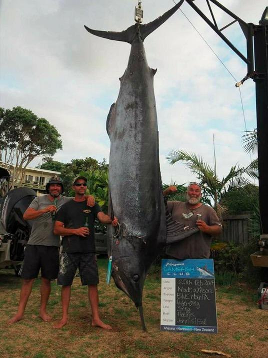 Grander Blue Marlin
