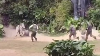Angry Zebra Attacks Zookeeper At Chinese Zoo, Drags Him Around Like A Rag Doll In Front Of Crowds