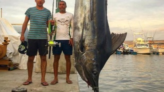 Guys Catch 1,095-Pound Blue Marlin And Find A Frickin' Sailfish Inside Its Stomach