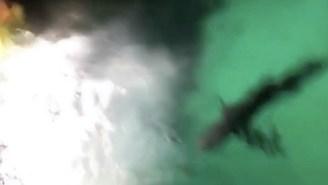 Bro Jumps Into The Atlantis Resort Shark Tank At Night Because SPRING BREAK, WOO!