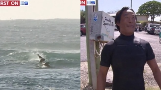 Surfer Gets Totally Body Slammed By A Dolphin, Is Absolutely Stoked About It