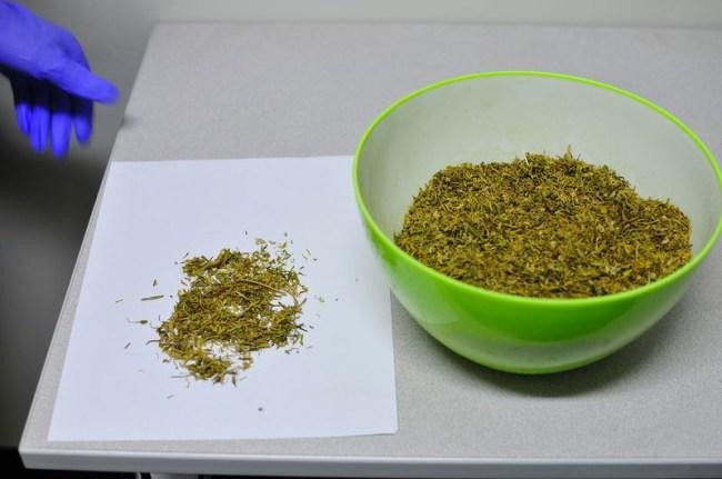 government supplied marijuana