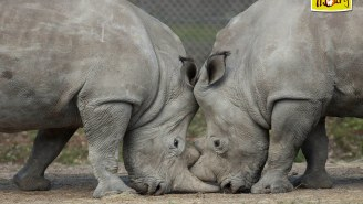 Poachers Broke Into Zoo, Shot And Killed Vince The Rhino, Then Used A Chainsaw To Remove Its Horn