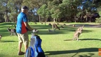 Aussie Bro Plays A Hole Of Golf While Surrounded By More Kangaroos Than I Can Count