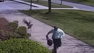 Wild Goose Attacks Police Officer And Sends Him Running Away In Fear