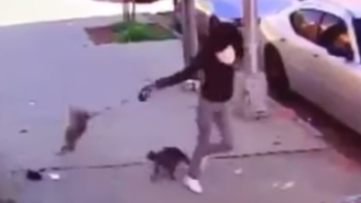 Woman Tries To Save Her Dog From Ferocious Cat Attack, Nearly Kills Pooch Instead
