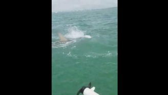Tarpon Fishermen Gets Surprise From 15-Foot Hammerhead Shark While Reeling In A Fish