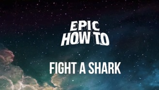 Worried About Shark Attacks? Here's How To Fight A Shark If You're Ever Caught In That Situation