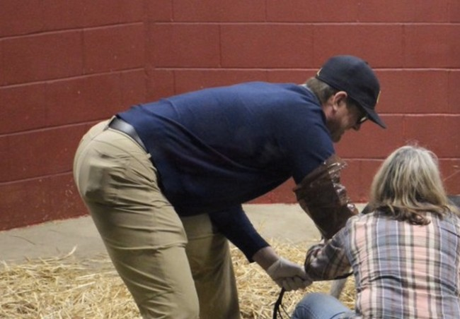 Jim Harbaugh delivers baby cow