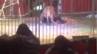 Lion Tamer Gets Mauled By An Aggressive Lion In Front Of Children At A Circus In France