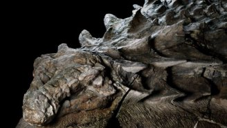 Incredible 'Sleeping Dragon' Dinosaur Mummy Is So Well Preserved That It Looks Like A Statue