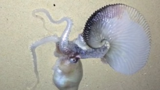 Sea Monster Found On Hawaiian Beach And It Looks Like An Octopus Had Sex With A Dragon