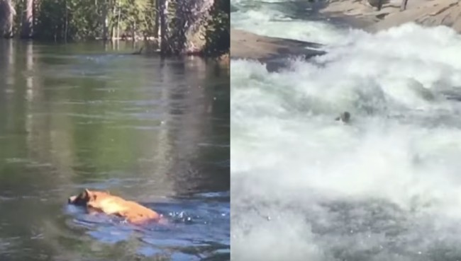 bear falls down waterfall Yosemite National Park