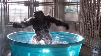 This Maniac Gorilla Dancing Is Your Party Spirit Animal This Weekend