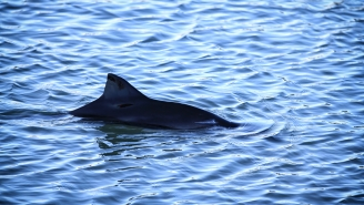 First Ever Two-Headed Porpoise Found By Fishermen And This Is A True Sea Monster