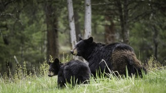 Professional Runner Forced To Run For His Life As 2 Bears Raced After Him
