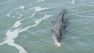 Deadly Crocodile And A Shark Fight Over A Fish…Who Ya Got?