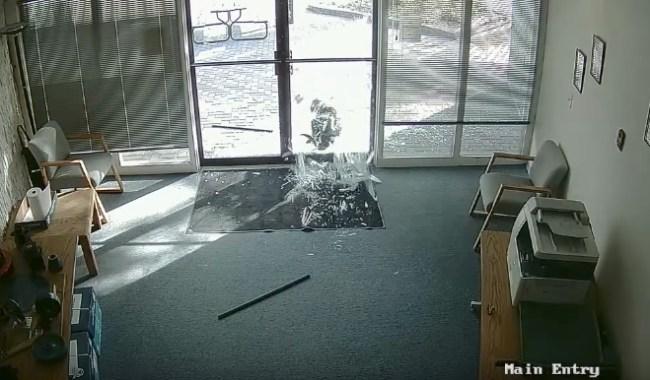 Goat smashes glass doors