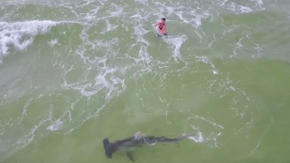 Bro Catches HUUUGE Hammerhead Shark While Fishing From The Sand On Panama City Beach