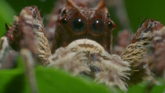This Crazy Looking Spider Has Three Insane Super Powers AND It Eats Other Spiders