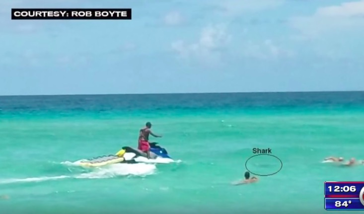 Crocodile attacks shark | Sharks Attacking People In Real Life | Shark pictures, Shark attack