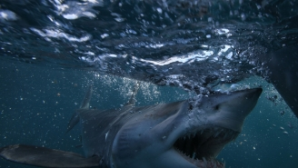Long Island Anglers Crap Their Pants When A Large Mako Shark Jumps On The Boat And Gets Stuck