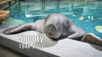 The Internet Mourns Snooty, The World's Oldest Living Manatee, Who Died The Day After His 69th Birthday