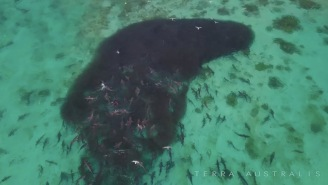 Crazy Aussie Bro Swims Inside Of Bait Ball With Thousands Of Fish And Tons Of Sharks
