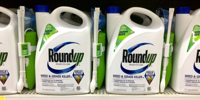 does roundup cause cancer