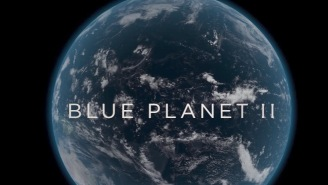 Absolutely Stunning Trailer For The BBC's 'Blue Planet II' Features A New Track From Radiohead And Hans Zimmer