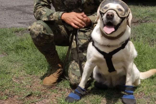 Frida Dog Mexico