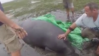 These Heroes Went Out In Hurricane Irma To Rescue Stranded Manatees And Other Exotic Creatures