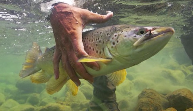 Andy Anderson photographer Orvis
