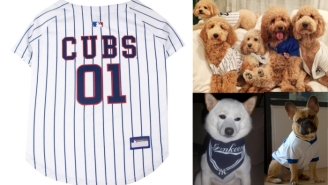 Post Season? More Like Pup SZN. Get Your Dog A MLB Jersey For $15