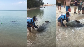 Bros Fishing On The Beach Catch MASSIVE Queensland Grouper Big Enough To Swallow Your Dog