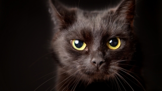 Dude Accidentally Steals His Neighbor's Cat After Mistaking It As His Own, Hilarity Ensues