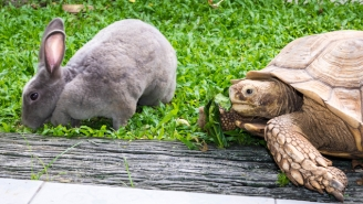 A Tortoise And A Hare Faced Off In Real Life In A Race For The Ages