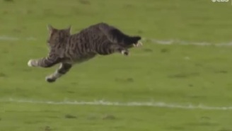 Tony Romo Doing Color Commentary Of A Cat Running On The Field Was Better Than Entire Ravens-Dolphins Game